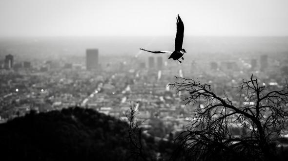 Los_Angeles_09