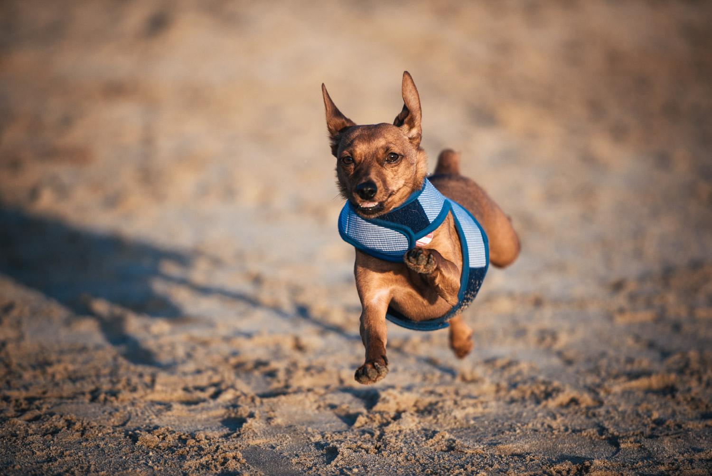 10 Tipps für Fotos von Hunden in Action