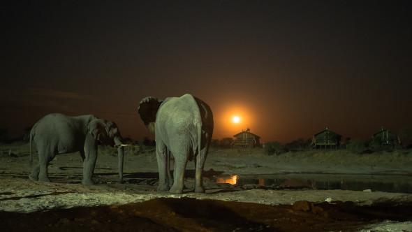 Elefant Sands Botswana, OMD-EM10, 17mm, f1.8, 0.6 sek, iso 1600