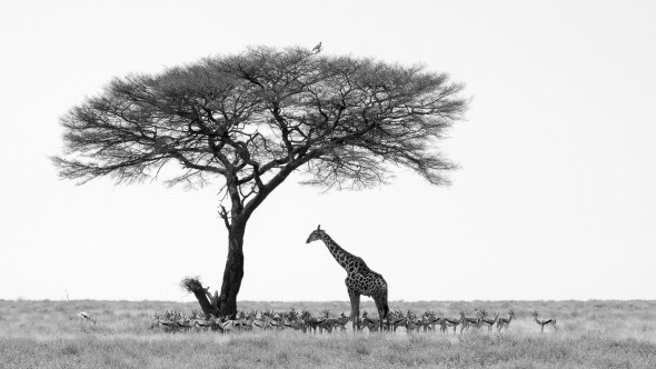 Schattensucher Etosha Nationalpark Namibia, d90, 200mm, f18 (keine Ahnung warum), 1/125 sek. iso 200