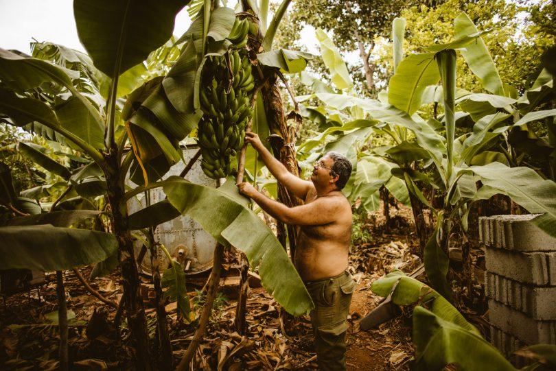 Eine kleine Obstplantage im Hinterhof unseres Gastgebers in Trinidad. Leica M240 + Summilux 21