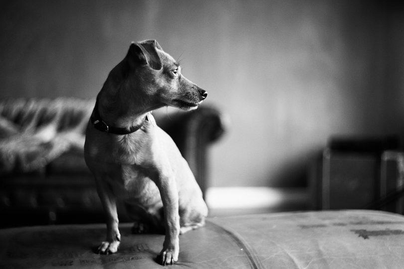 Leica Summitar 50 mm f/2.0
