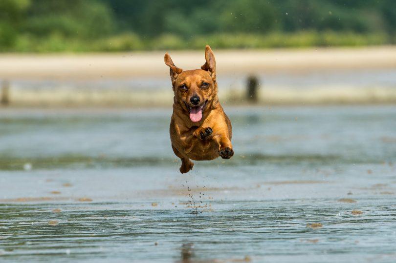Für solche Aufnahmen ist ein 70-200 wie gemacht. Zusammen mit einem schnellen Autofokus sind dynamische Hunde- oder Sportaufnahmen garantiert. Hier 200 mm bei f/5.6