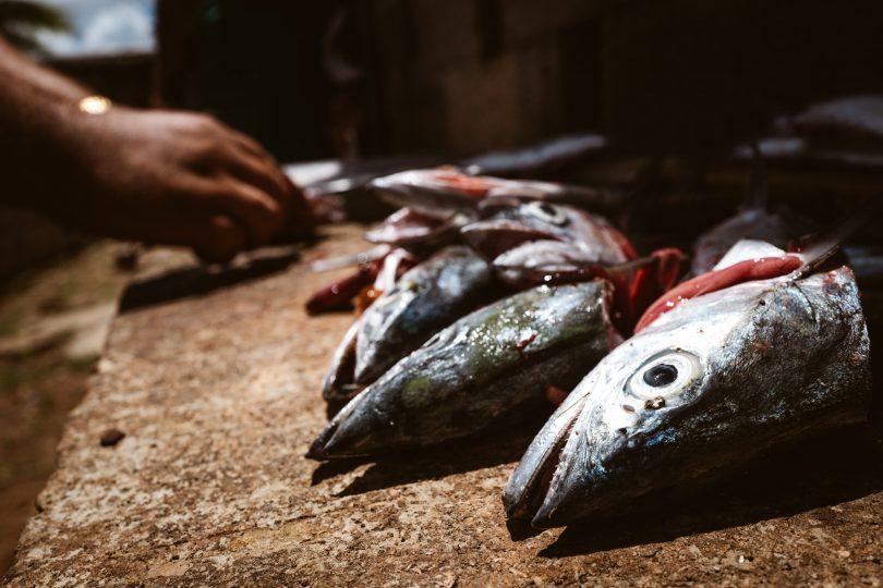 Die Fische werden auch gleich ausgenommen für uns